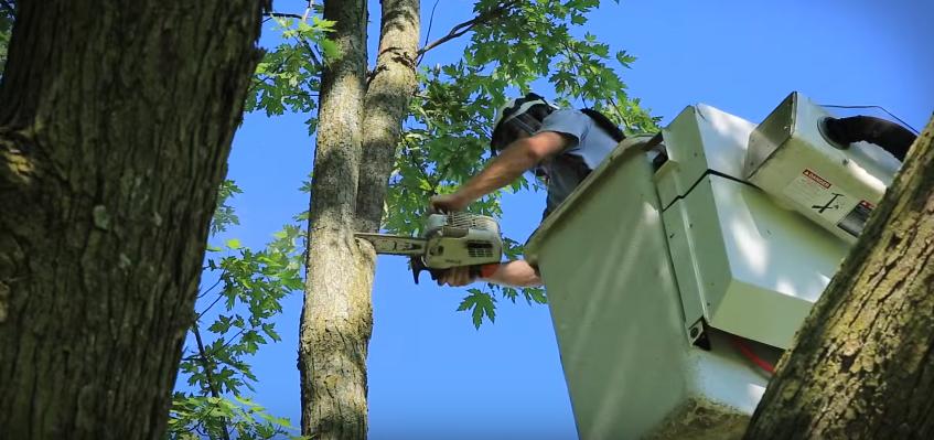 tree removal tuscaloosa al