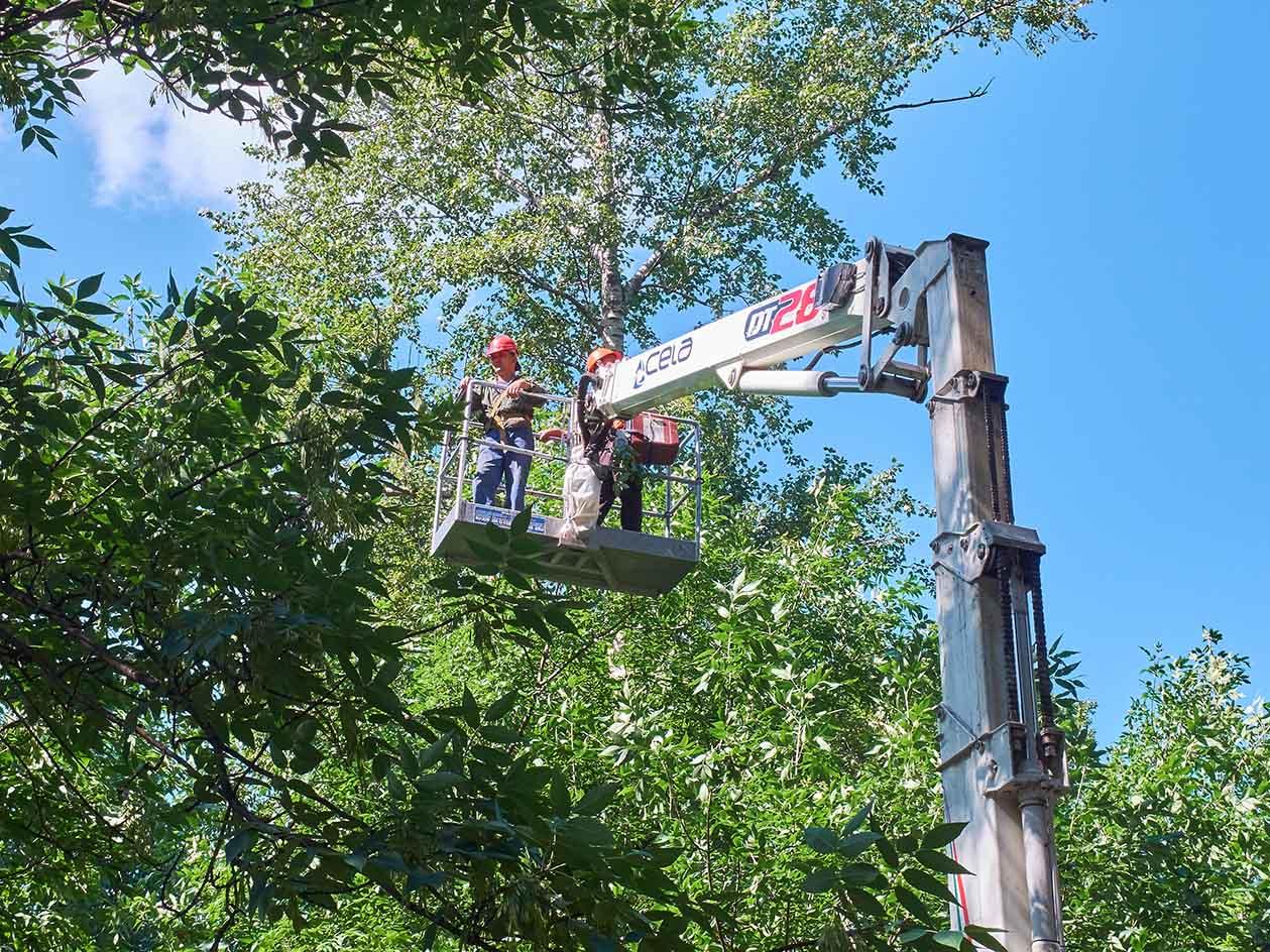 tree service tuscaloosa al